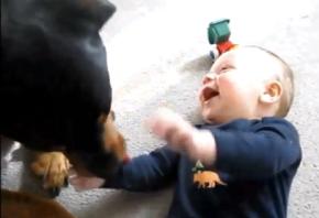 baby laugh dog