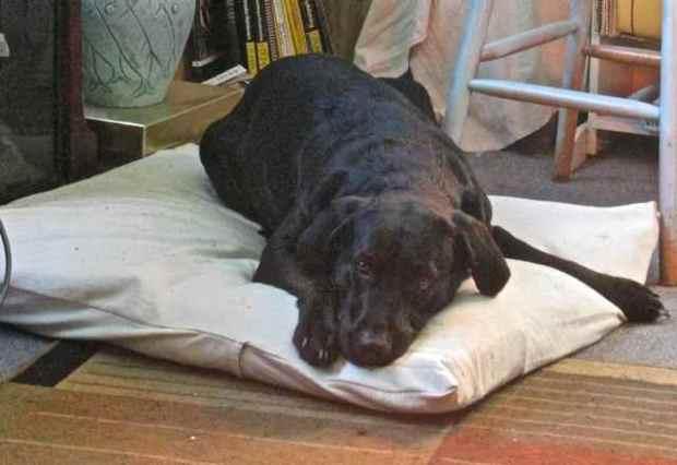 000 dog bed Lady crop