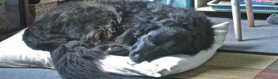 Mollie dog bed 950_270