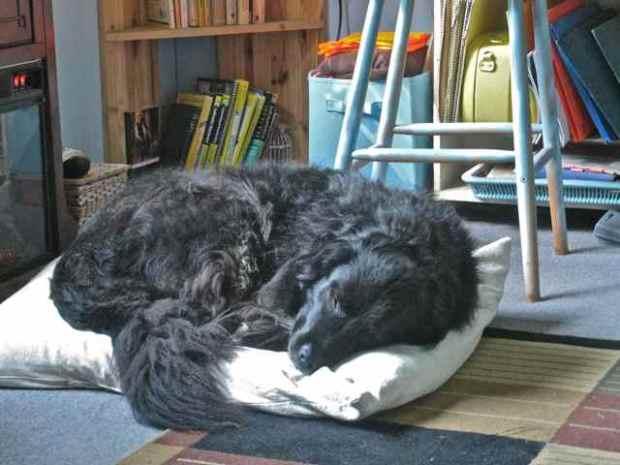 Mollie dog bed